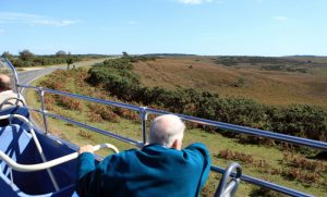 The New Forest from an open deck bus